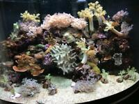 Soft corals for £8-£25