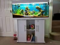 Jewel 180 fish tank