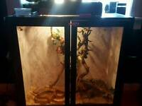 4ft corn snake with tank