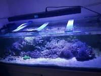 Marine fish tank for sale