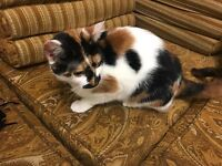 One year old female cat