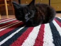 Baby cat, very lovely .