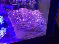 Marine fish corals for sale
