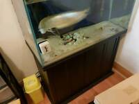 large fish tank and large fish for sale