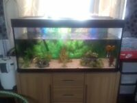 Large tank and tropical set up