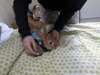 ginger rabbit (friendly and soft) looking for a home