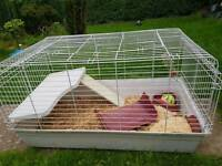 Indoor cage for rabbit