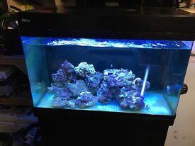 Red Sea max 250 aquarium complete setup