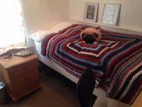 Single room to rent in Hatfield £300pcm + bills