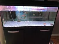 3ft fish tank for sale