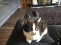 Kittens for sale to go loving homes