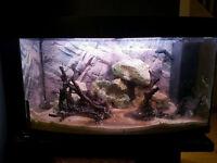 Juwel vision 180 fish tank aquarium for sale/swap, Bangor.. £90