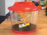 Small plastic fish tank