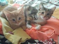 Amazing tabby kittens