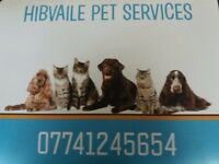 Dog walker and home boarder fully licensed and insured