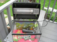 Fish tank Aquariums (Glass not platic) idea for the starter including accesories