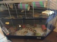 3 friendly rats and cage