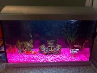 Glass fish tank with pump, lights and ornaments