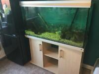 Tropical fish tank with fish