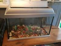 Fish tank with stones