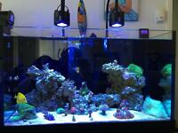 Aquarium and livestock for sale