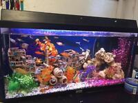 Full set up fish tank.
