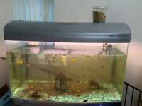 Fish Tank Cheap