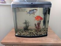 28 litre fish tank and 2 fish.