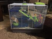 Syrian hamster, cage and some extras