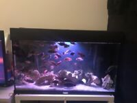 rio 125 litre fish tank including inbuilt filter and heater