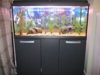 Interpet 160Ltr Fish Tank with Graphite Cabinet Stand plus many extras, £150.