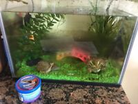 Tropical Fish and fish tank for sale