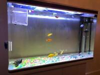Fish tank 4foot 300l
