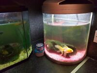 2x fishtanks with fish