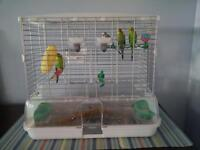 """4 Budgie birds & large """"vision cage"""" for sale."""
