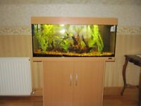 Juwel Rio 180 fish tank and fish