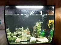 Fluval fish aquarium