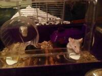 Smudge speck and Delilah need a new home