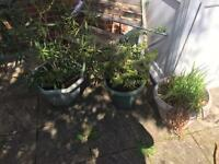 3 plastic plant pots and plants