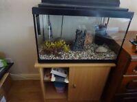 Fish tank with cupboard