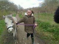 Lead rein pony