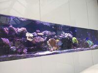 Marine Xenia fish