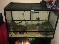 Texas Rat snake with tarrarium