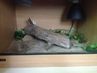 Ready to go reptile tank