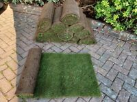 12 Rolls of Premium Quality Turf For Sale!