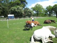Free Taster Sessions Equine ssisted Learning.