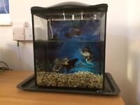 17L Pirates Fish Tank with Gold fish and gravel!