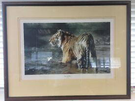 "Tiger print - ""morning glory"" - limited edition"