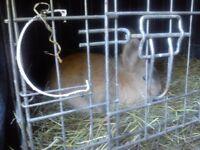 indoor rabbit with hutch