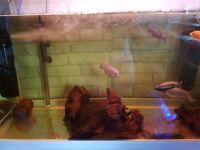 Boyu 250 Ltr fish tank